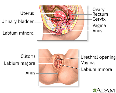 Fill Picture and anatomy of a female clitoris know, you