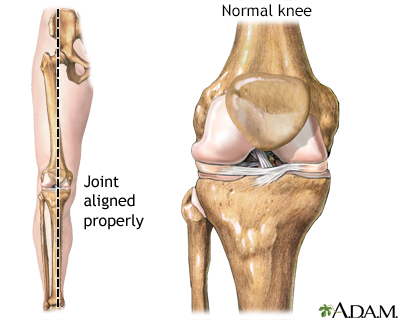 Normal knee alignment