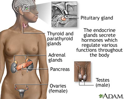 kinds of glands in human body