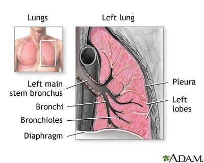 Respiratory System Information