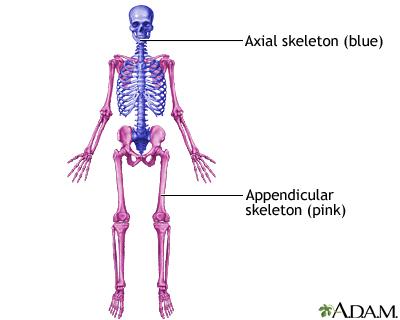 Skeletal System Information