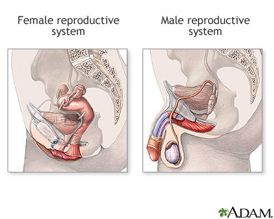 Reproductive organ during sexual intercourse personal